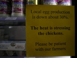 Coop_signchickens_003