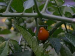 Dorset_harvest_farm_001_1