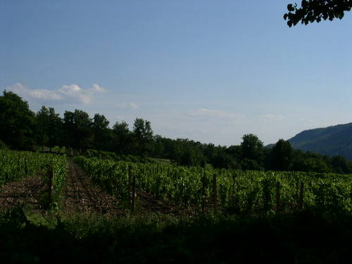 Pr_vineyards_1